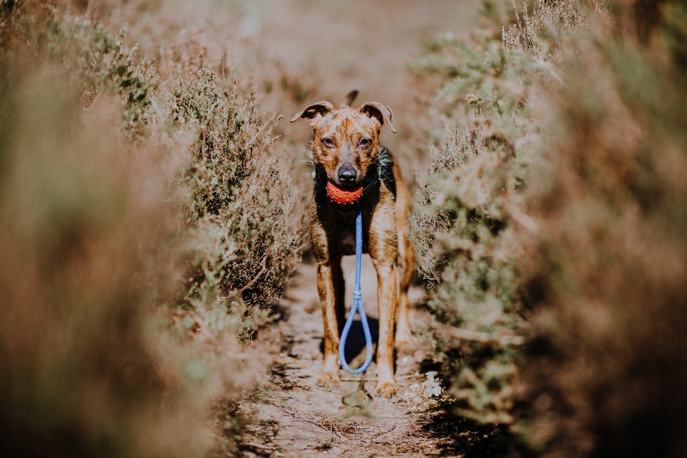 shallow focus photography of brown dog