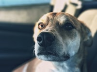 closeup photo of dogs face