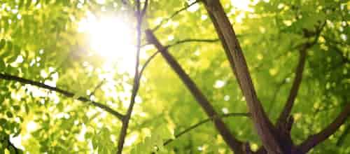 שבר ענף ירוק |  בלה שגיא