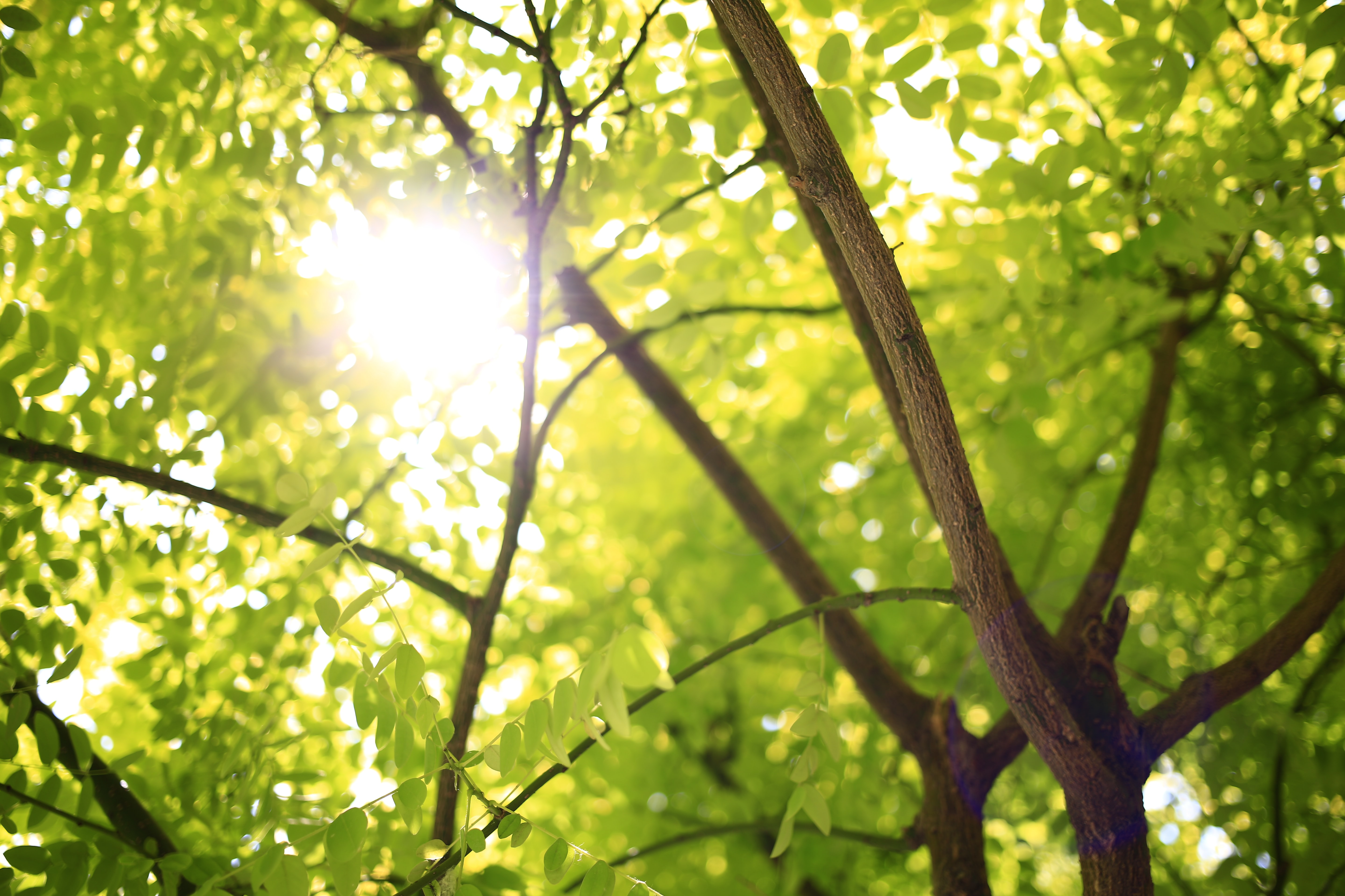 A close-up of a tree and its leaves with the sun leaking through