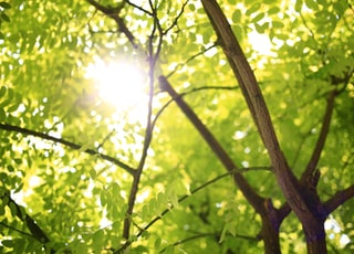 green leafed tree with sunlight at daytime