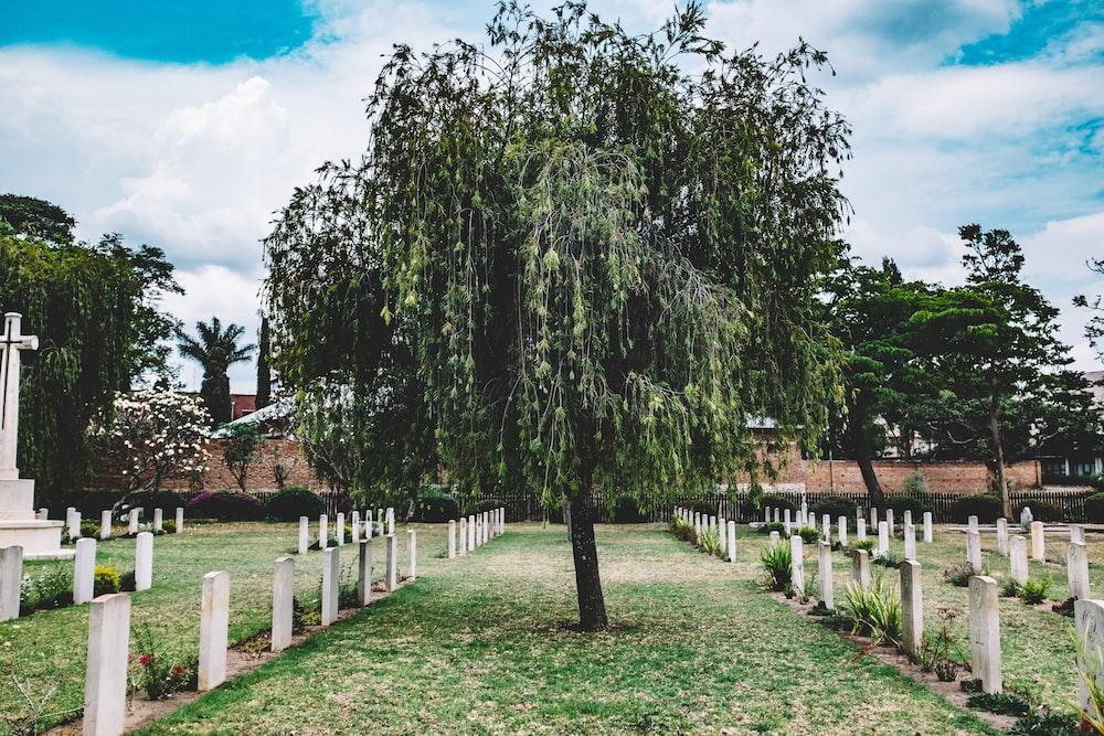 lone tree on graveyard