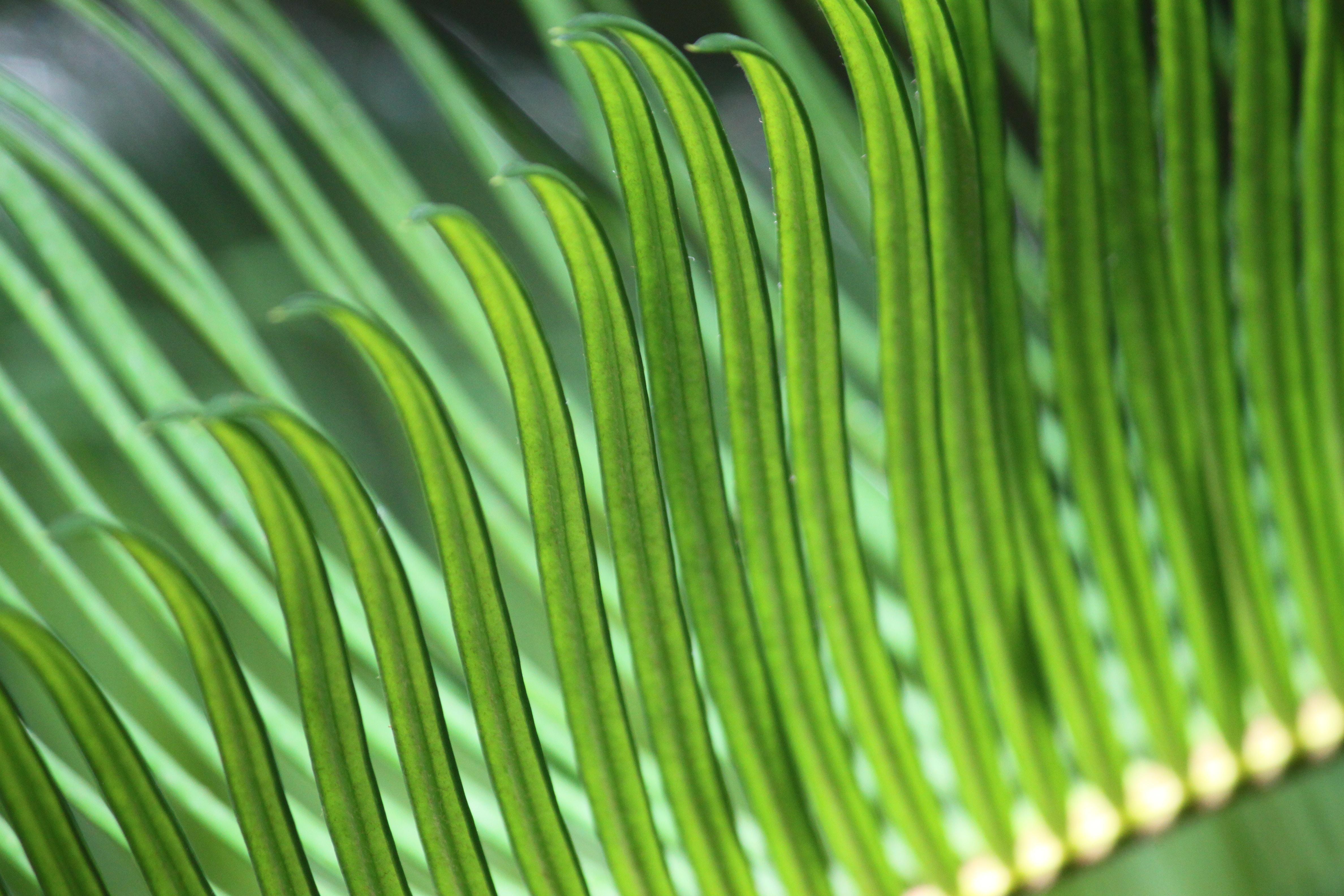 Macro shot of long and thin green leaves at Huntington Beach