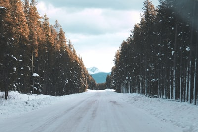 road filled with snow going to mountain between trees during snow banff teams background