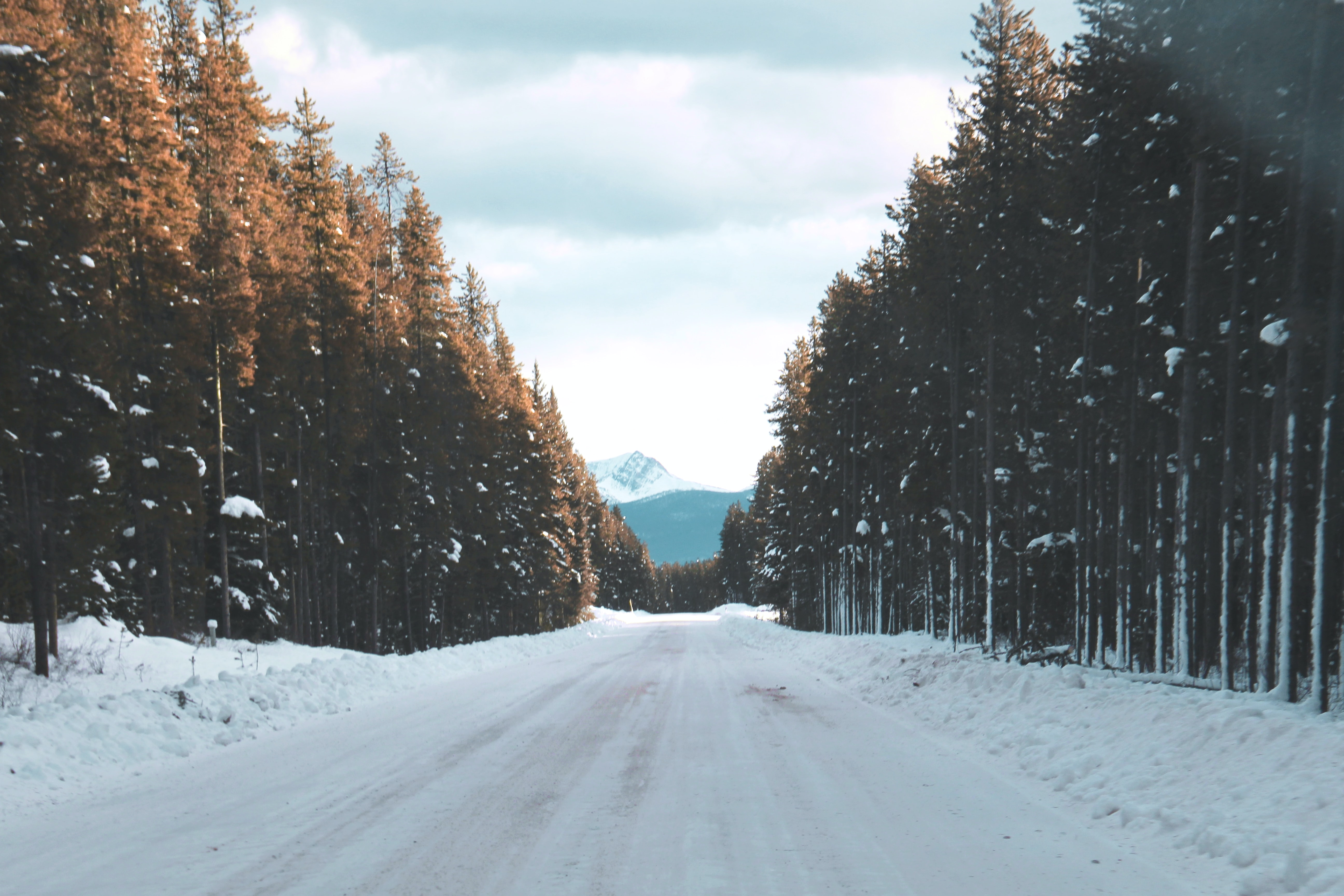 road filled with snow going to mountain between trees during snow