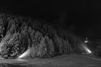 grayscale photography of pine trees