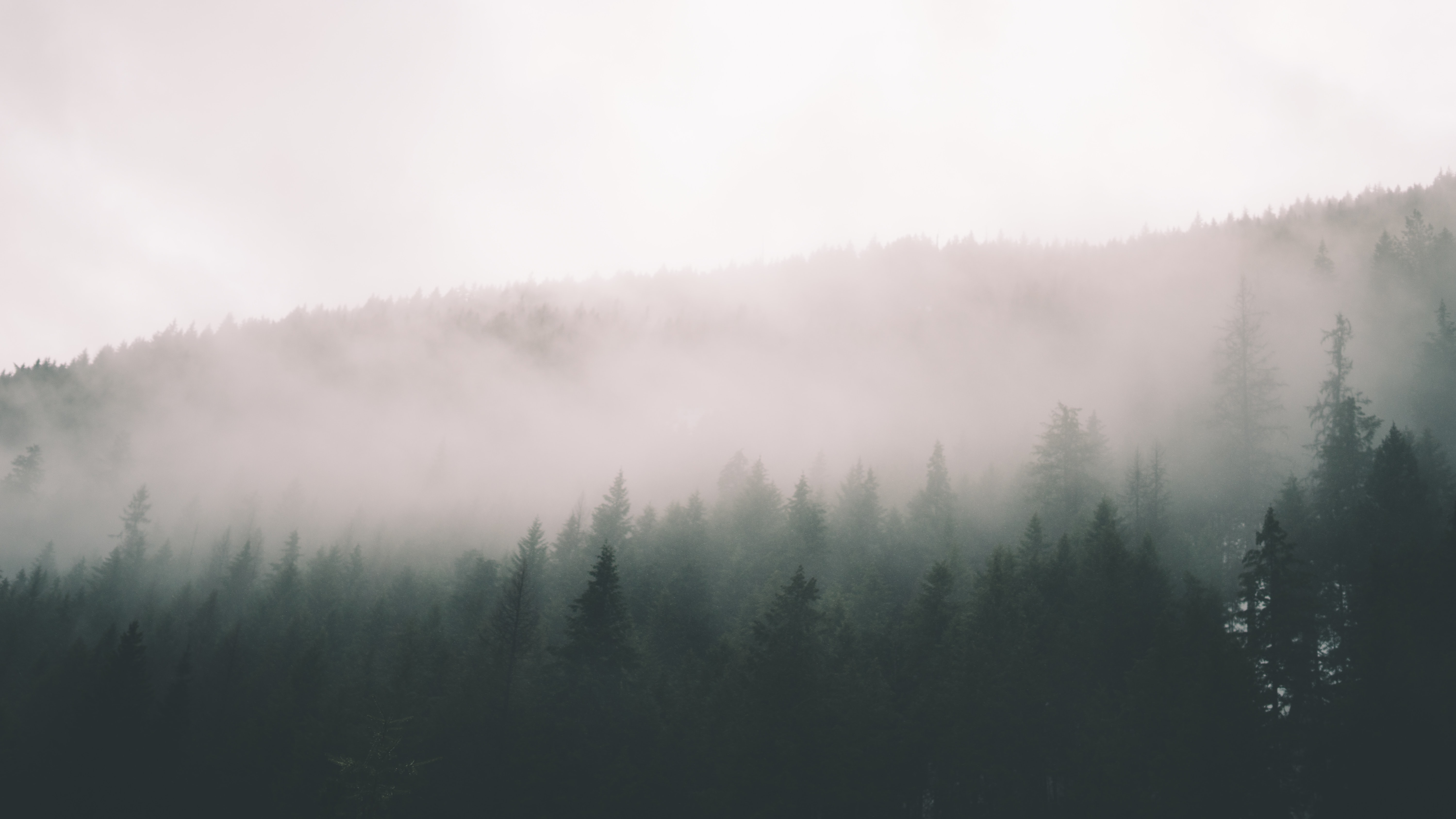 trees near mountain during foggy weather