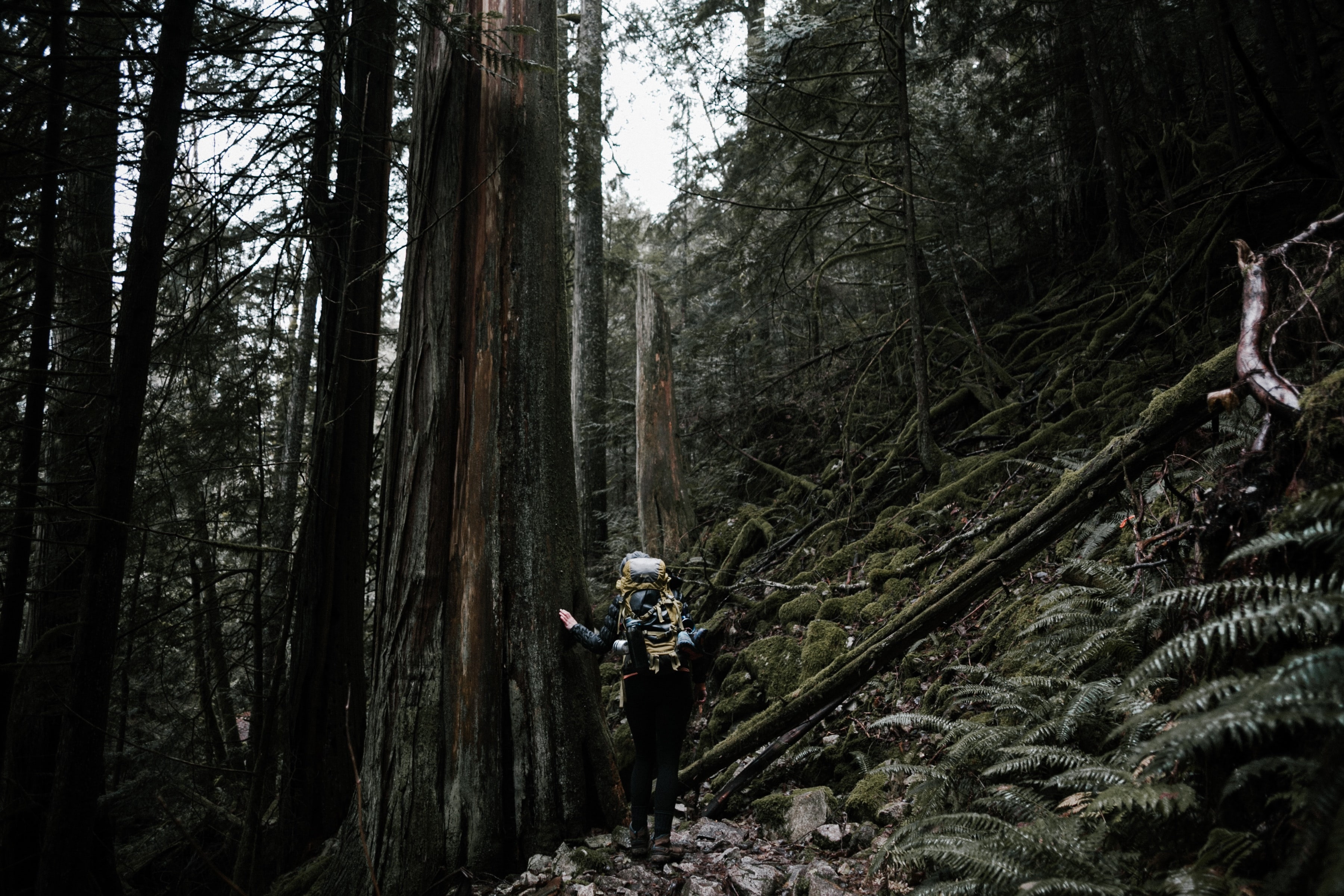 A long hiker standing next to a massive tree by a rocky slope