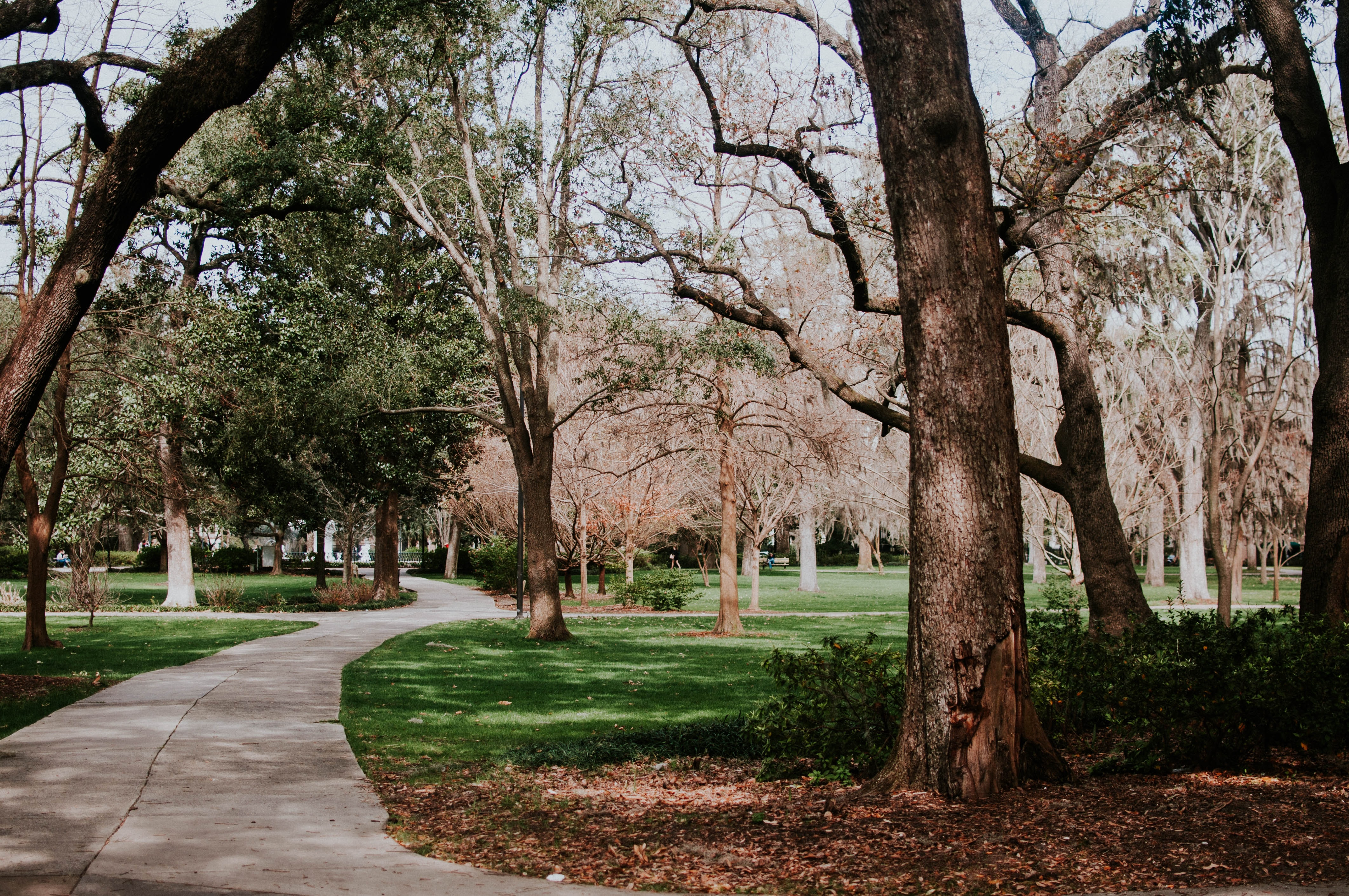 A path in Forsyth Park surrounded by trees and grass