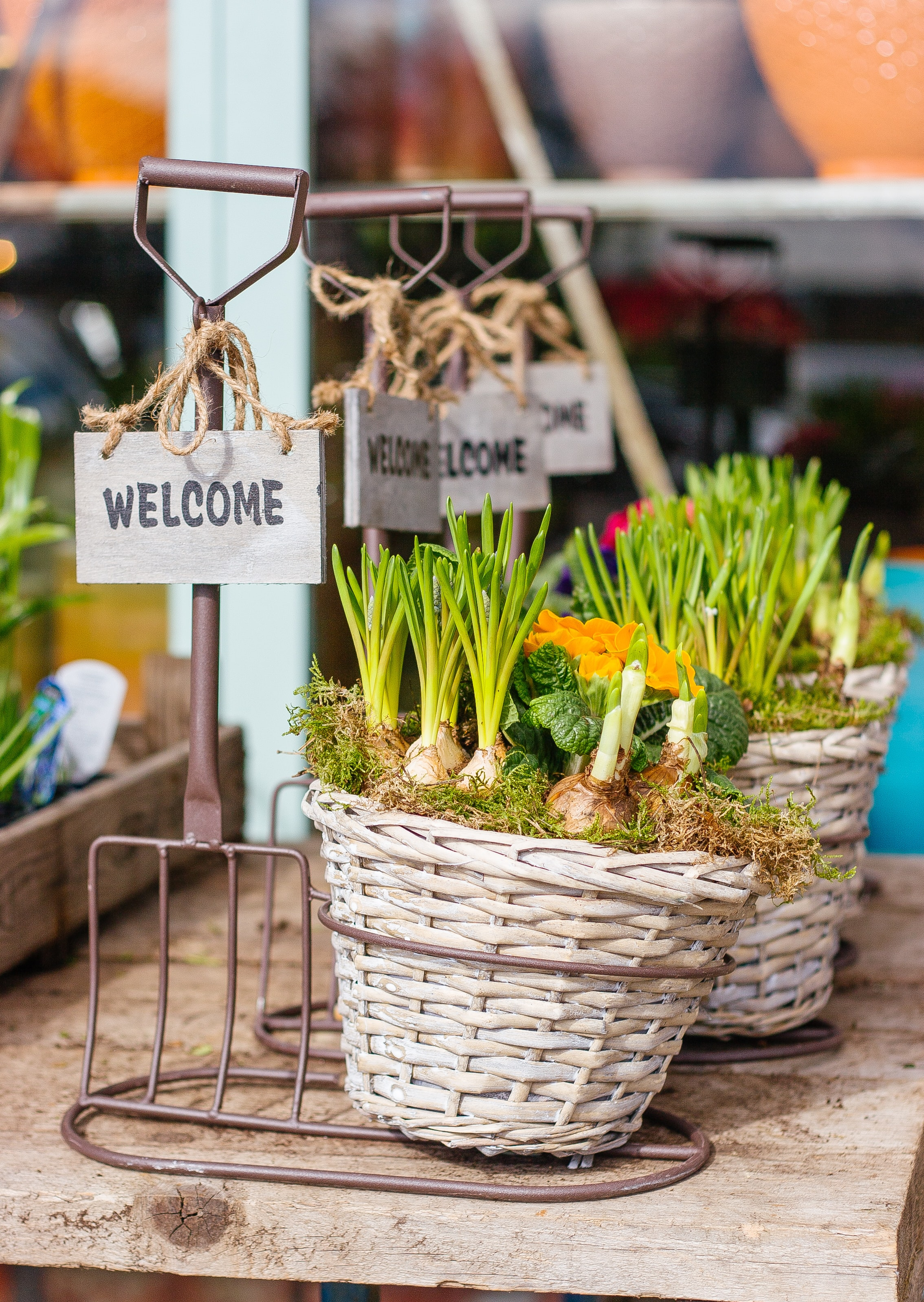 Twine basket with welcome sign at garden market with plants in Spring