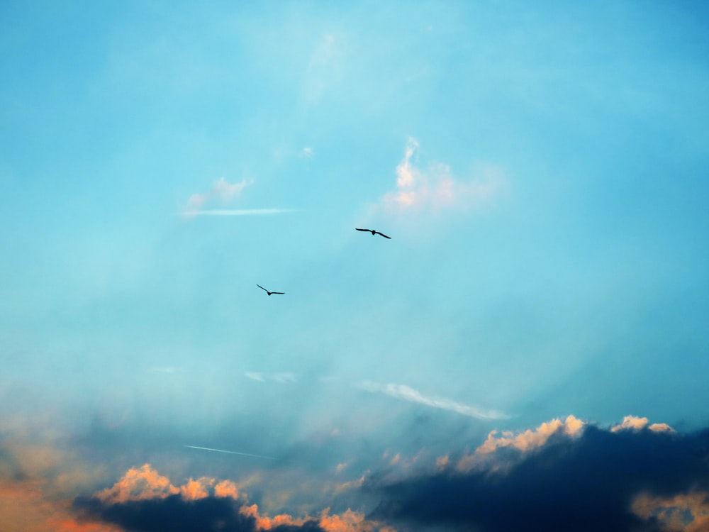 two flying birds on sky at daytime