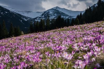 pink flower field at daytime