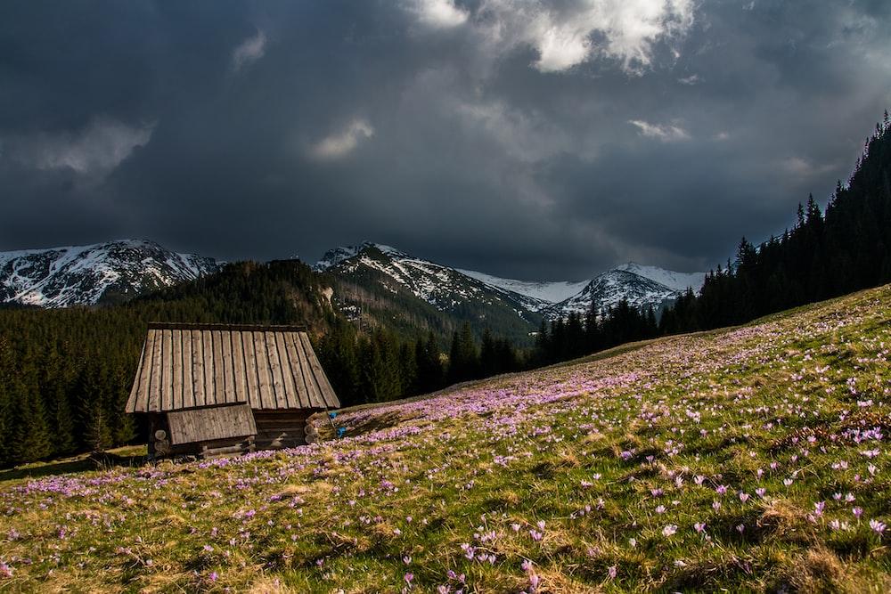photography of green grass field
