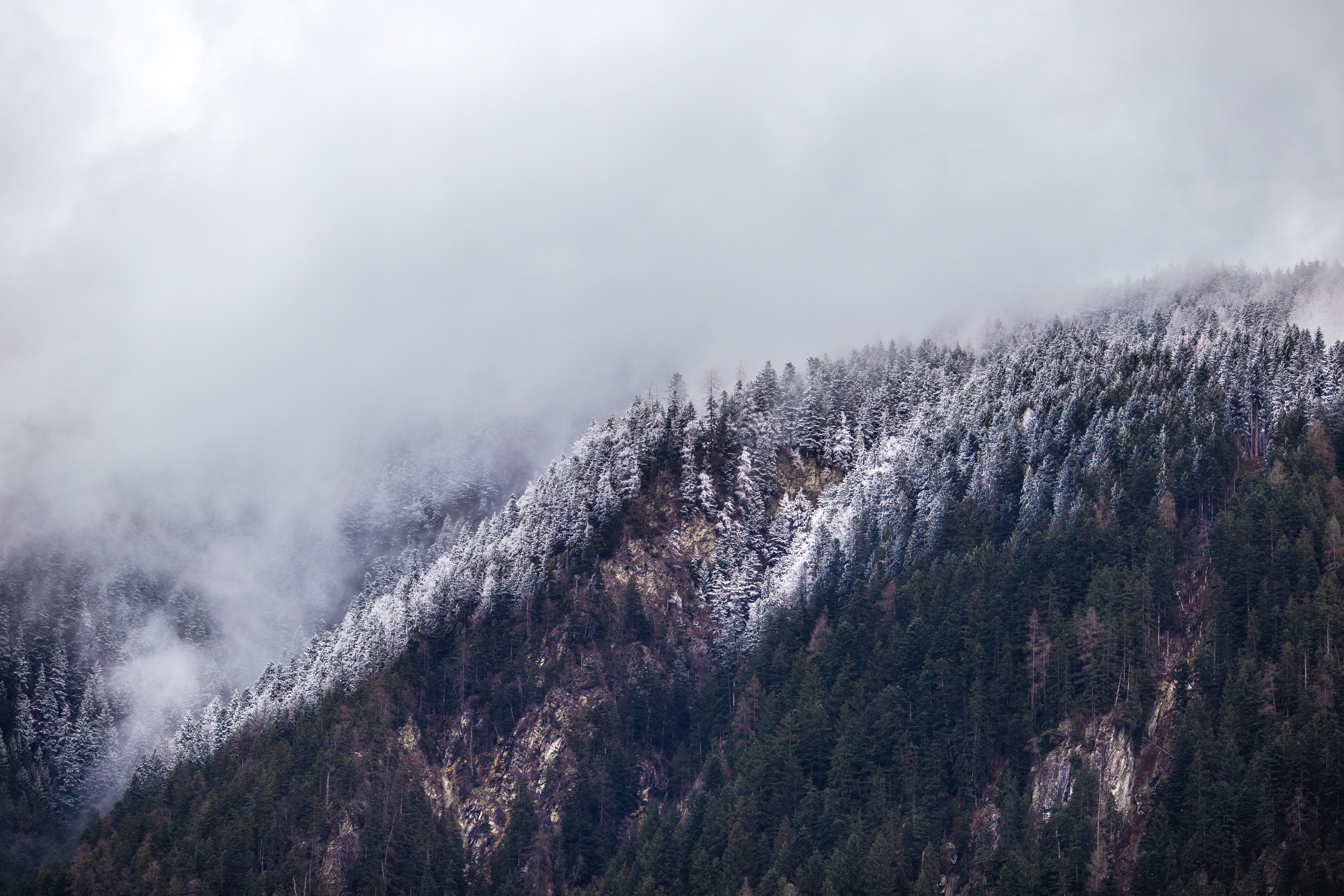 Snow on evergreen trees covering a misty hillside