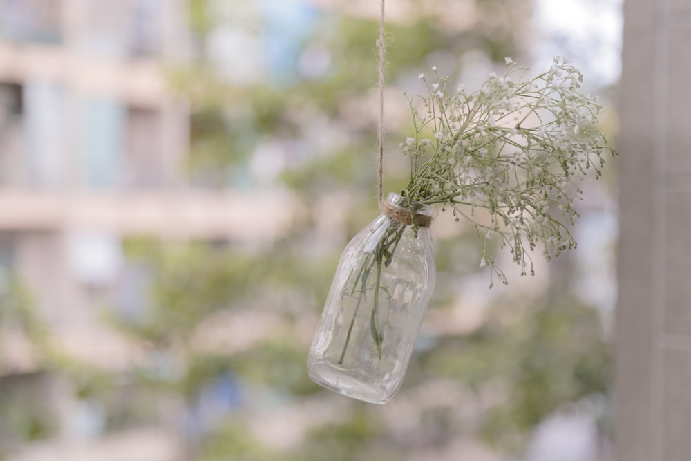 shallow focus photography of green leafed plant in bottle