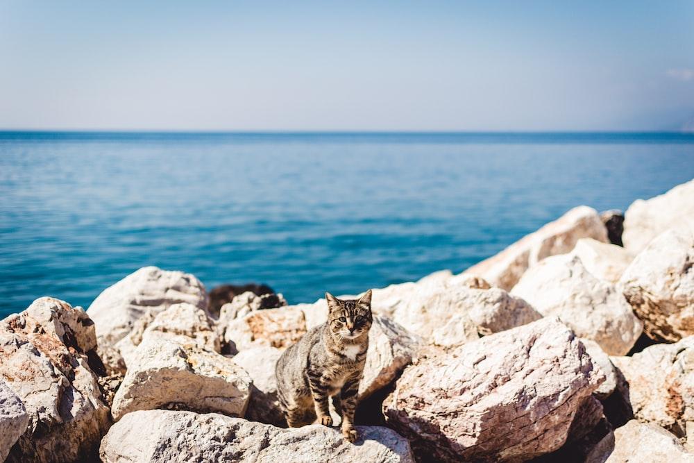 brown tabby cat standing on rocks