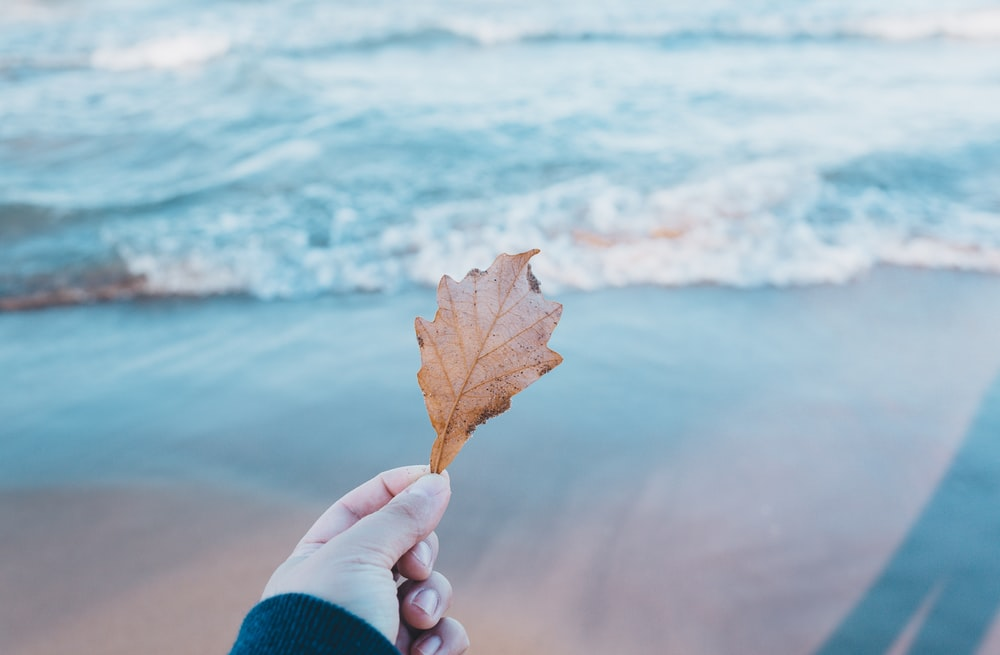 person holding dried leaf near body of water