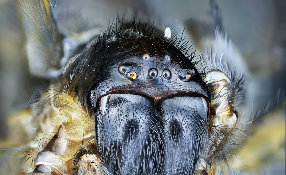 macro shot photography of black spider