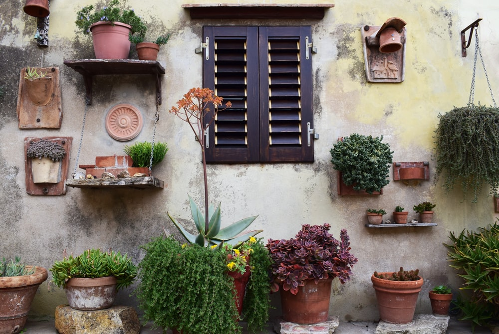 photo of wall with variety of plants