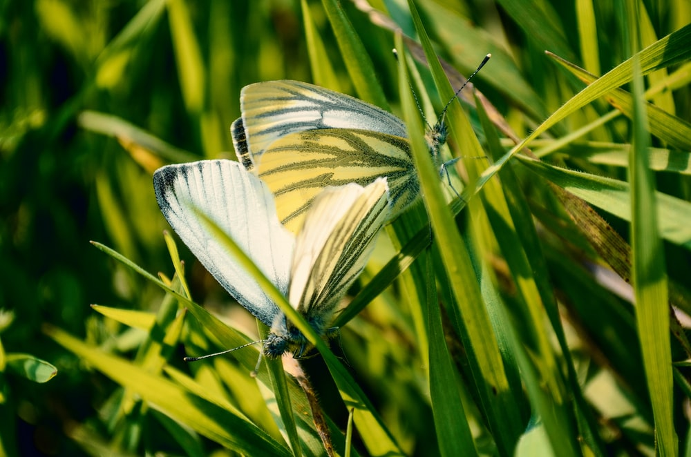 photography of butterfly