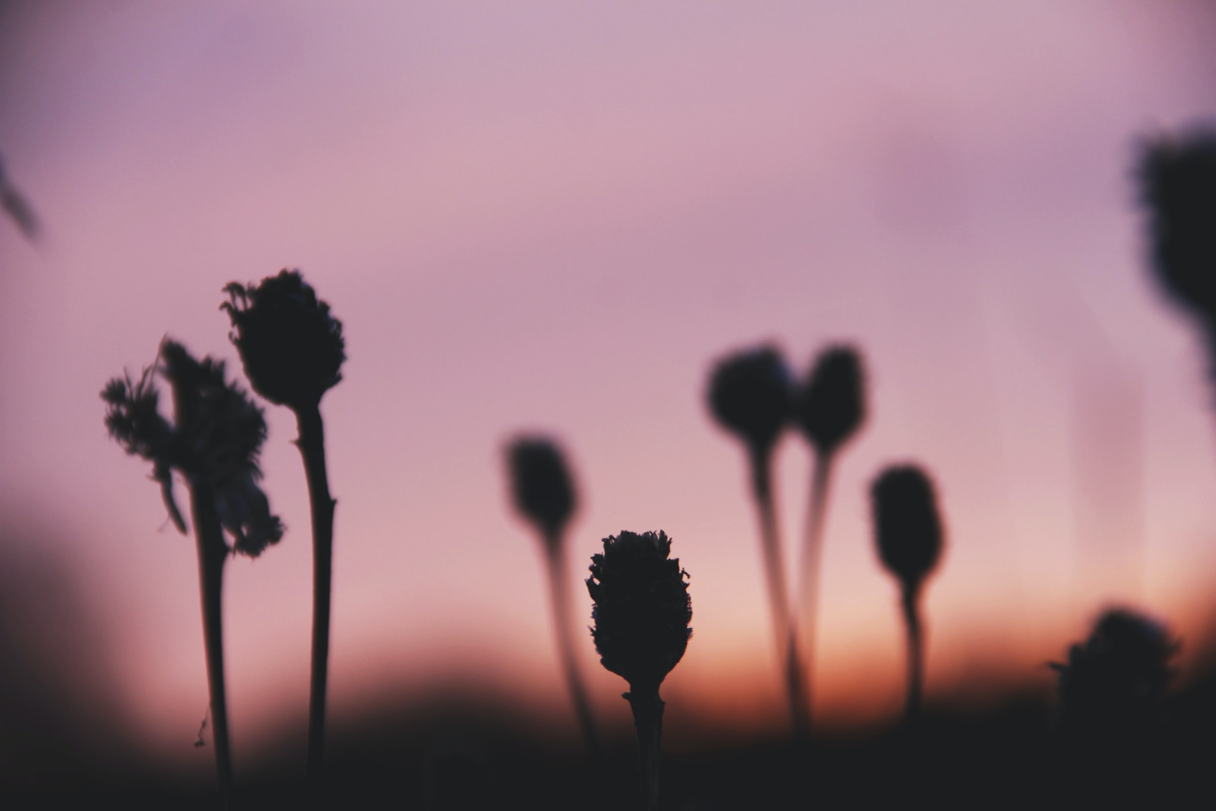 silhouette photo of plants at sunset