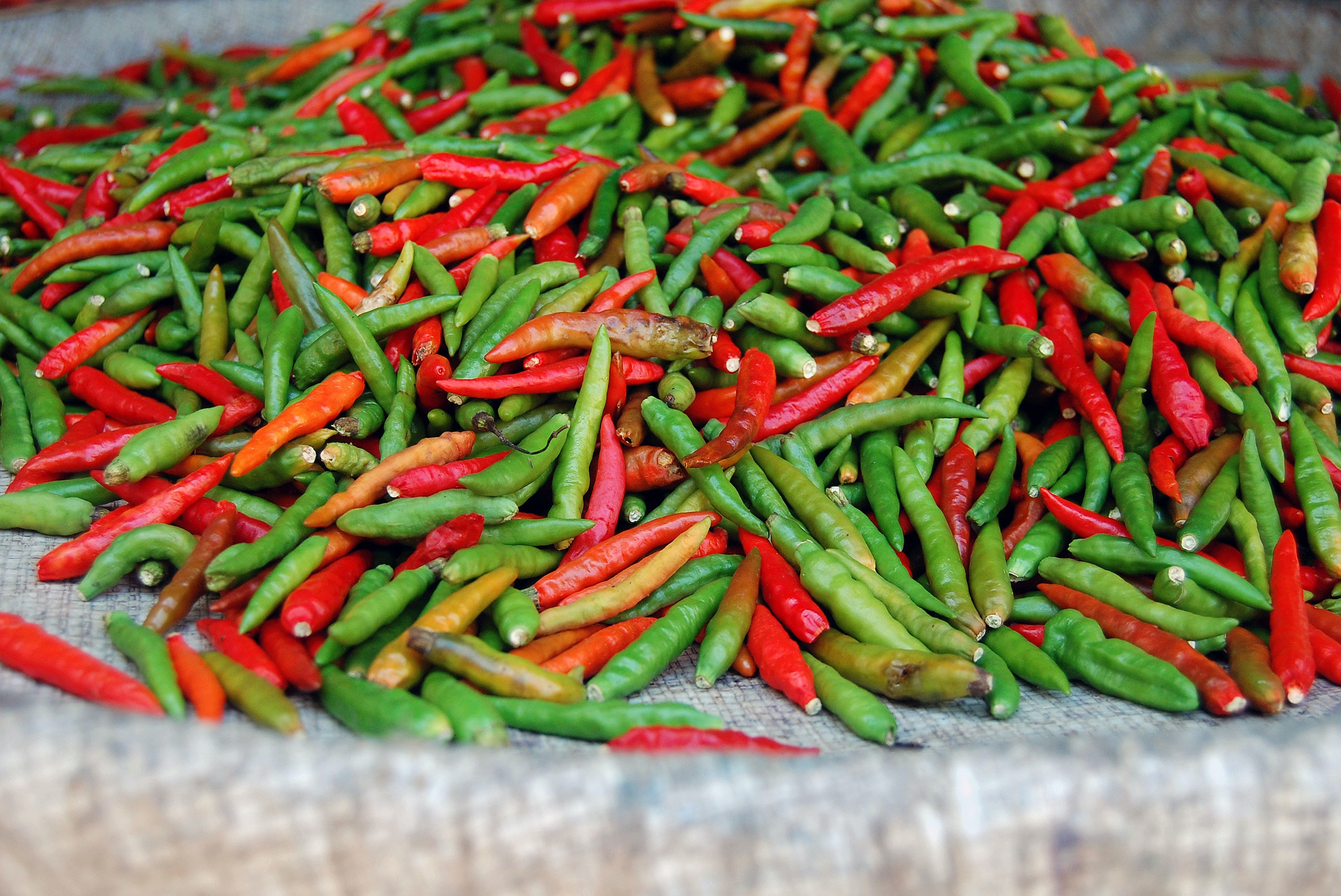Red and green chili peppers gathered in a cloth