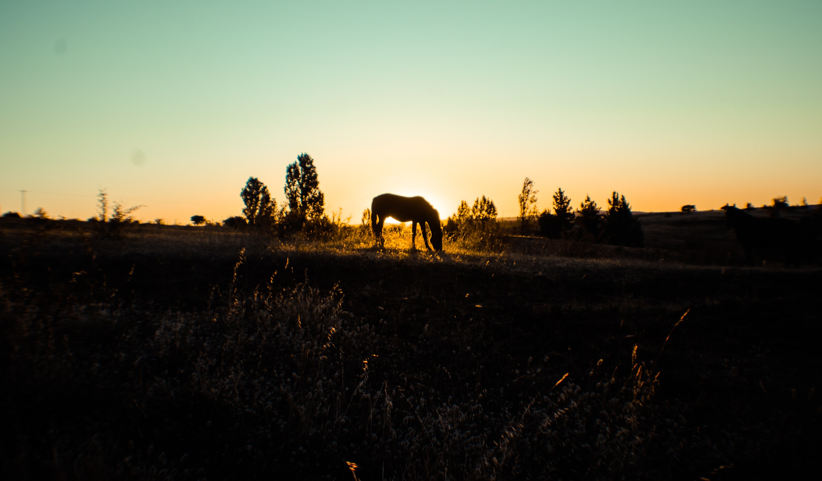 The silhouette of a lone horse grazing on grass during sunset