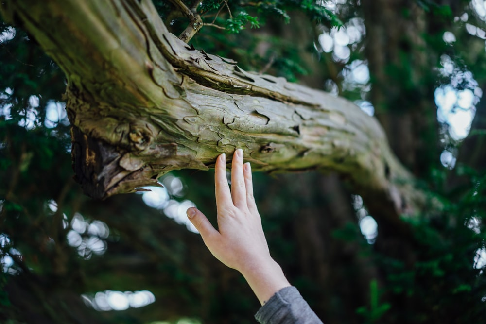 person's hand touching tree trunk