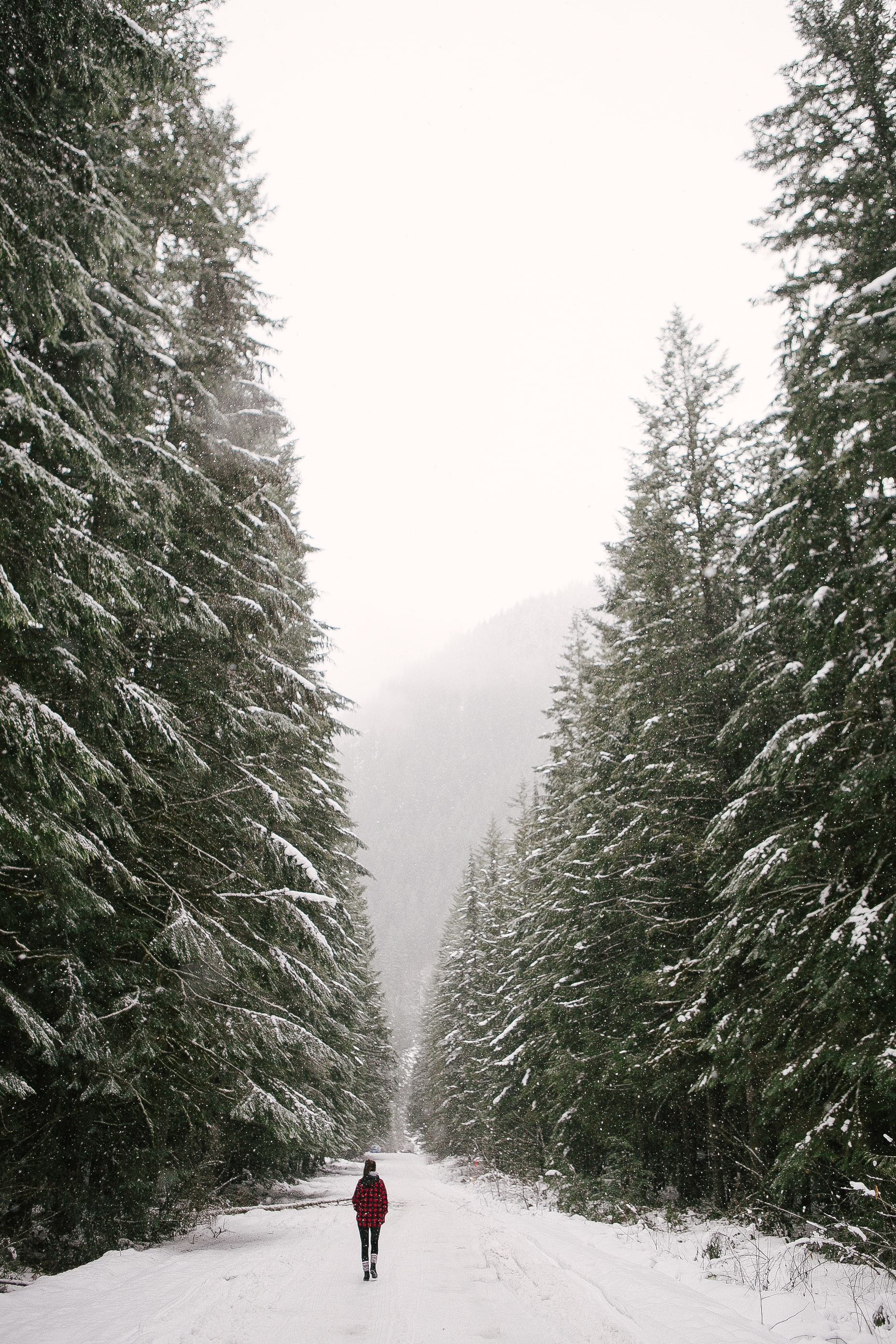 person walking on snowy road between green pine trees