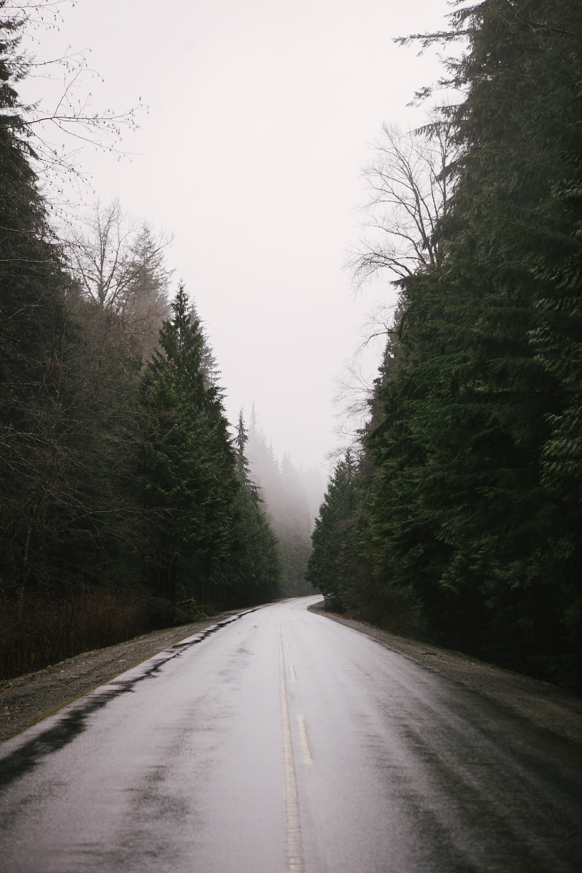 A wet tree-lined road on a foggy day