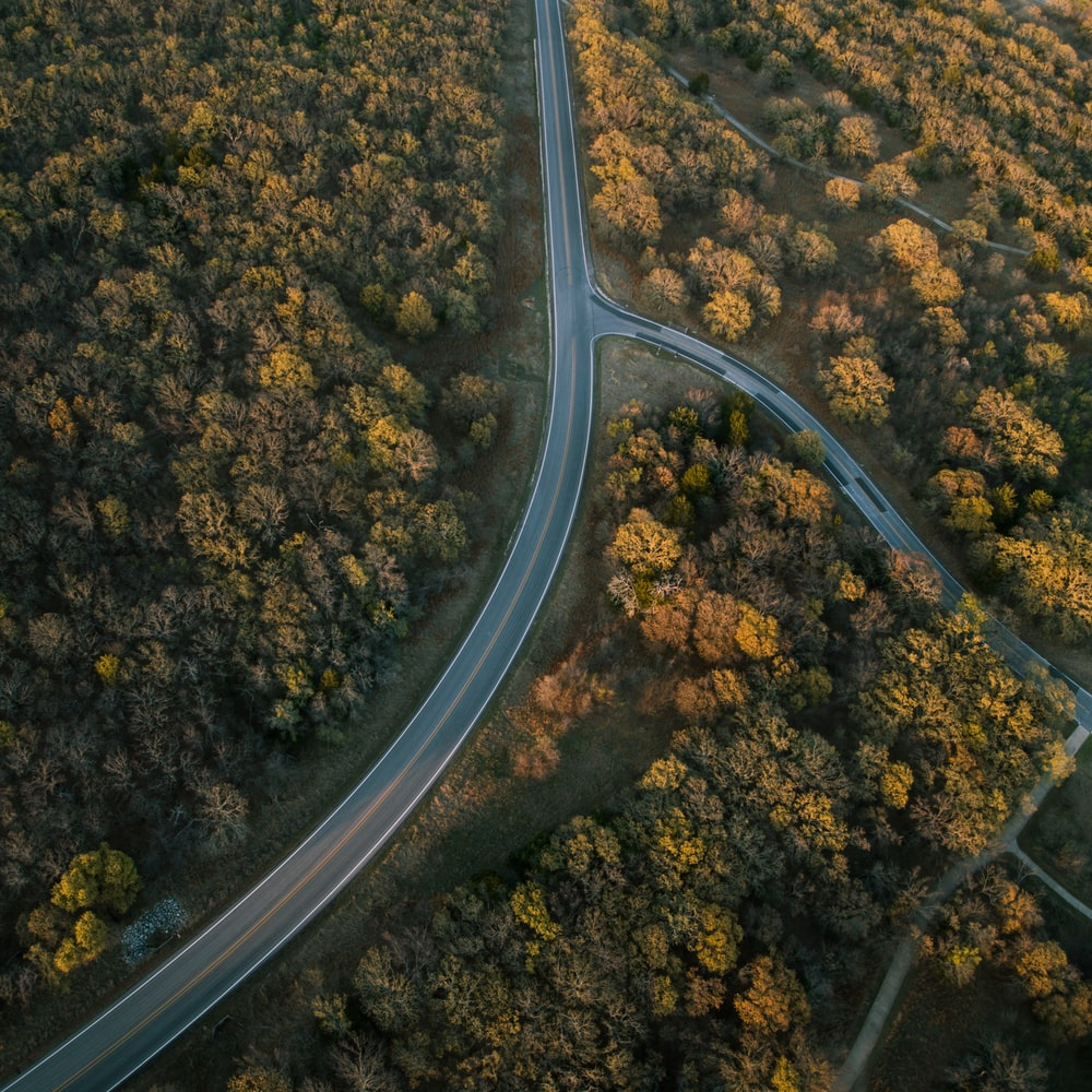 aerial photography of road and trees