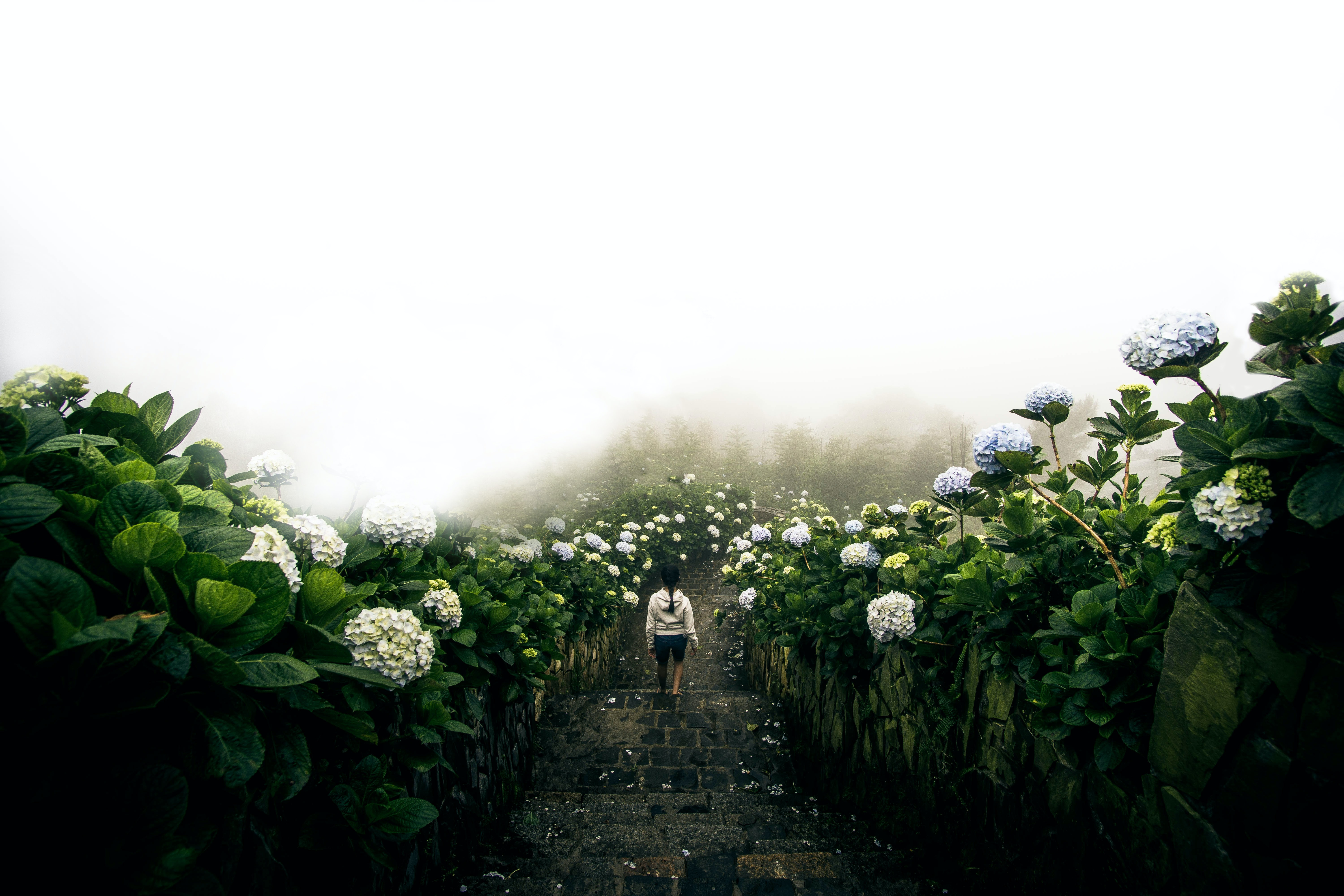 A woman walking down stone steps lined with white hydrangea flowers