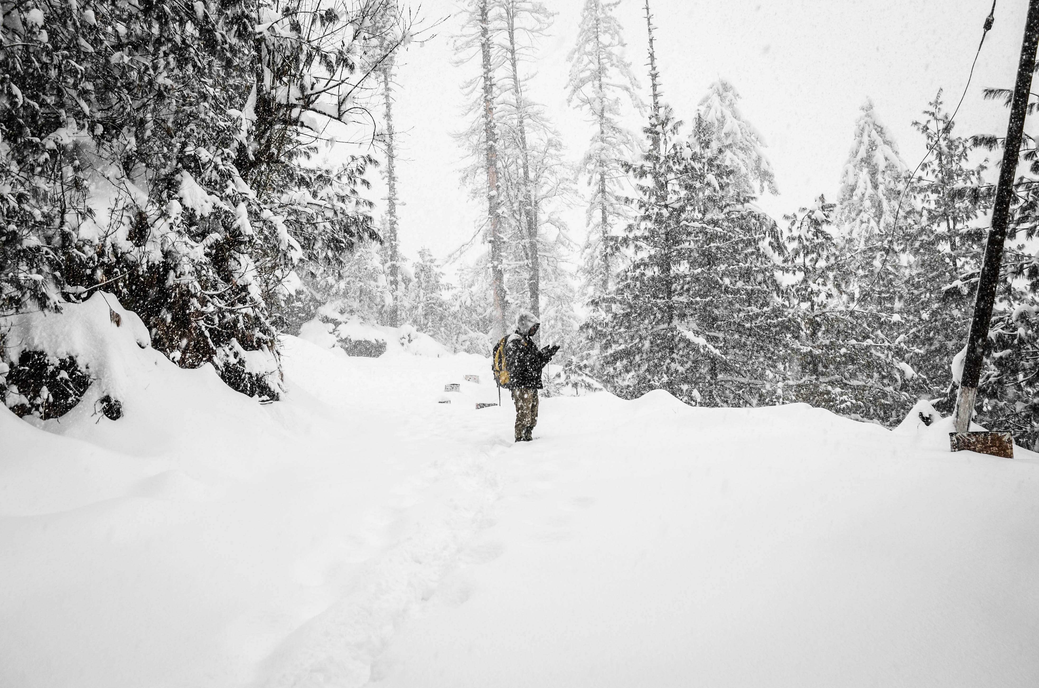 A man hiking through a forest on a snowy winter day in Shimla