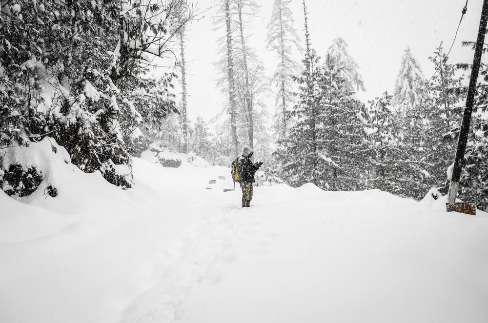 person standing in the middle of snowfield near trees