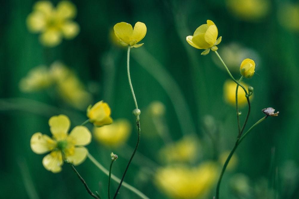 closeup photo of yellow petaled flowers