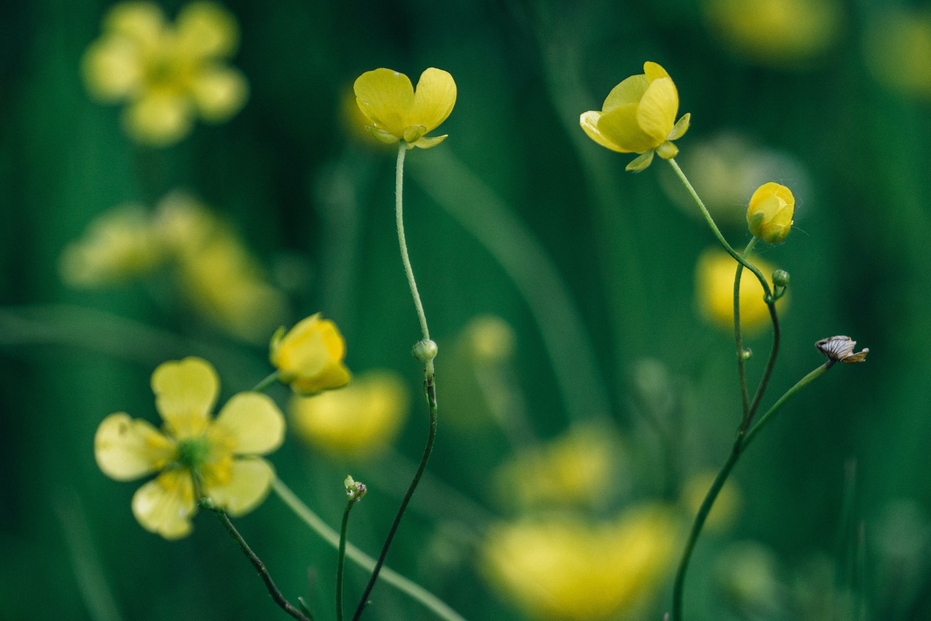 closeup photo of yellow petaled flowers