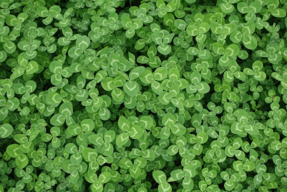 green leaf flowers