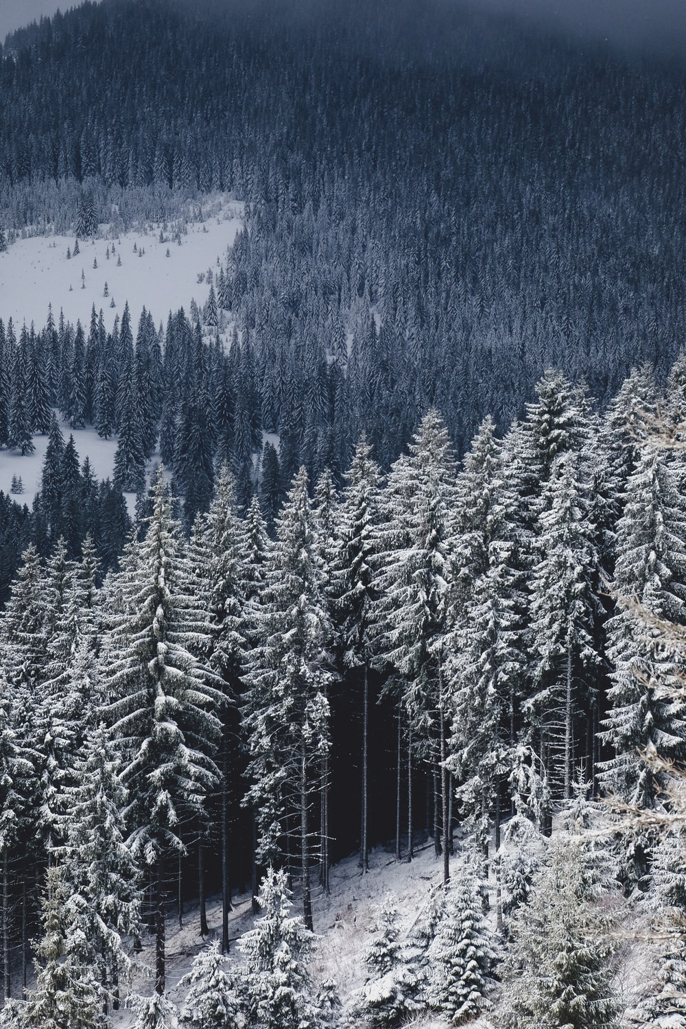 Beautiful Forests 36 Best Free Forest Wood Pine And