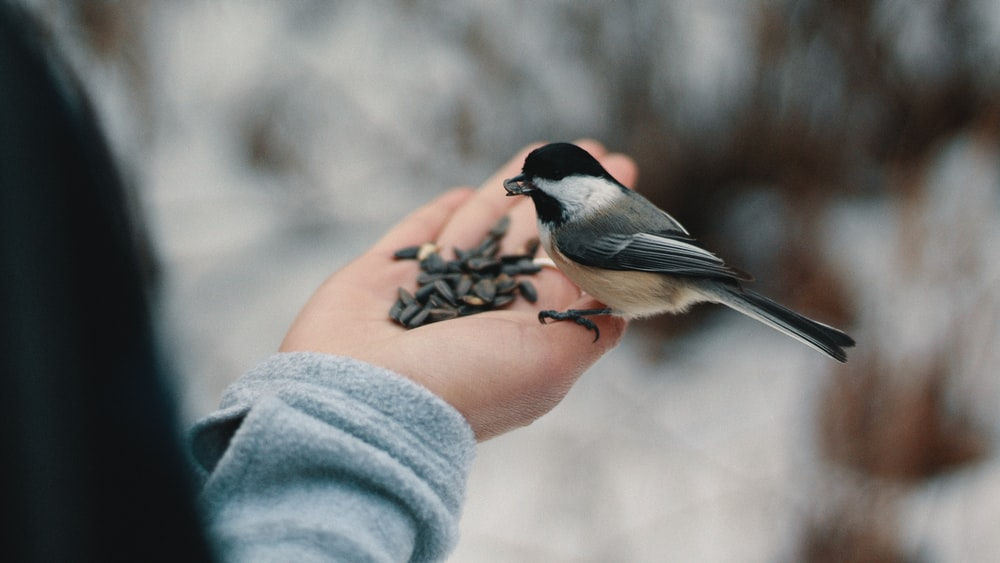 bird perching on person's right hand while eating nuts