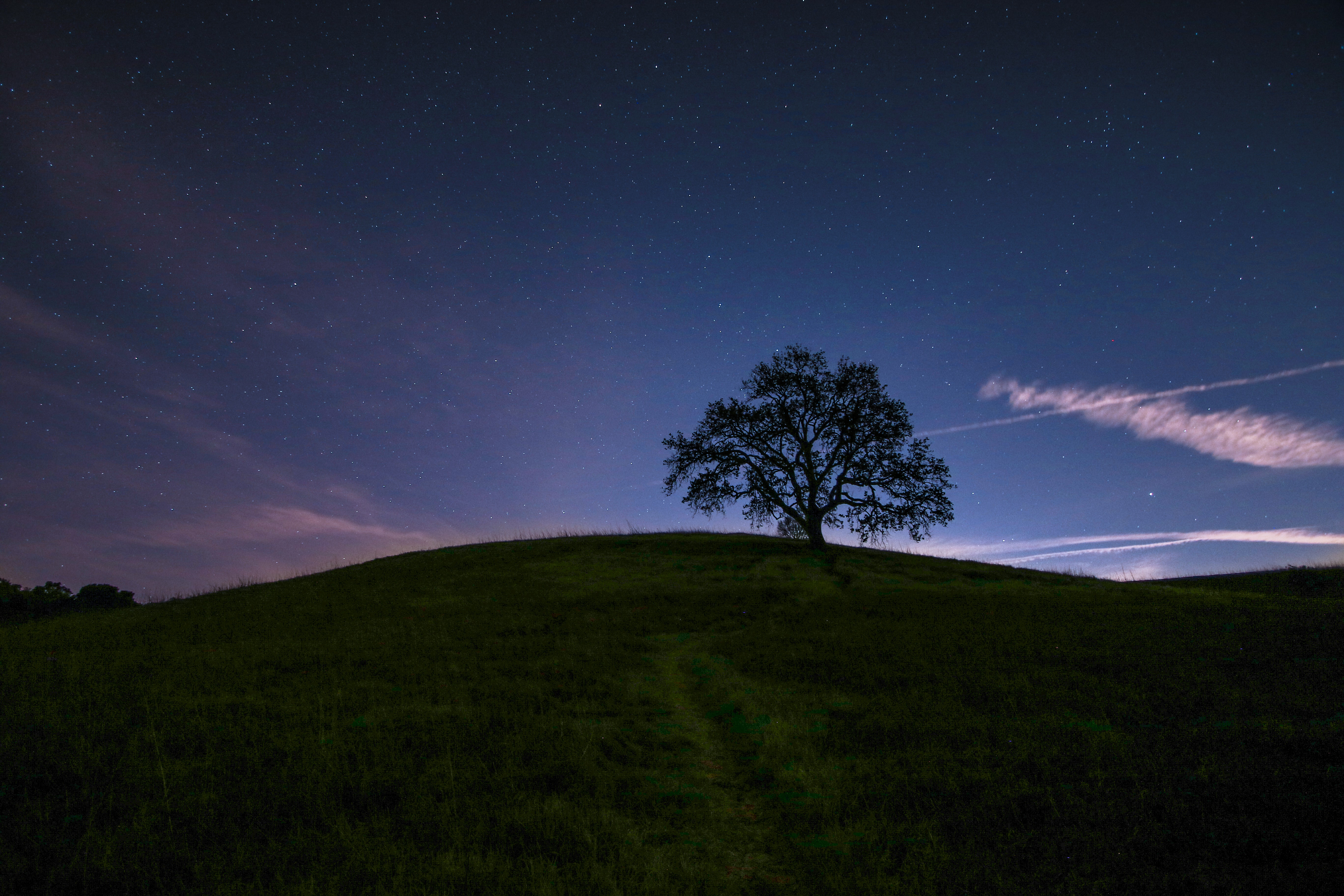 green tree surrounded by grass under blue sky