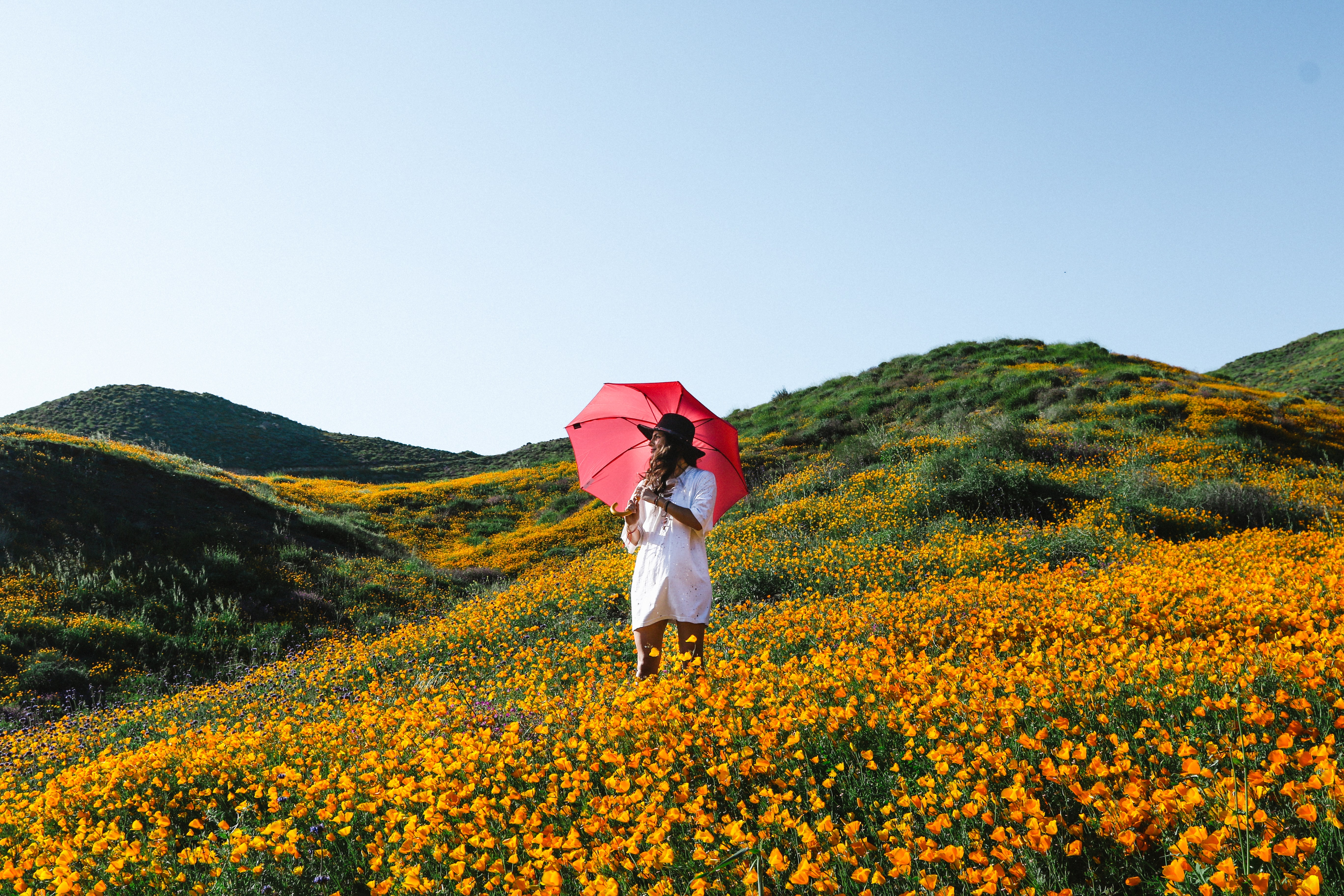 woman walking on orange petaled flower plant field while holding red umbrella
