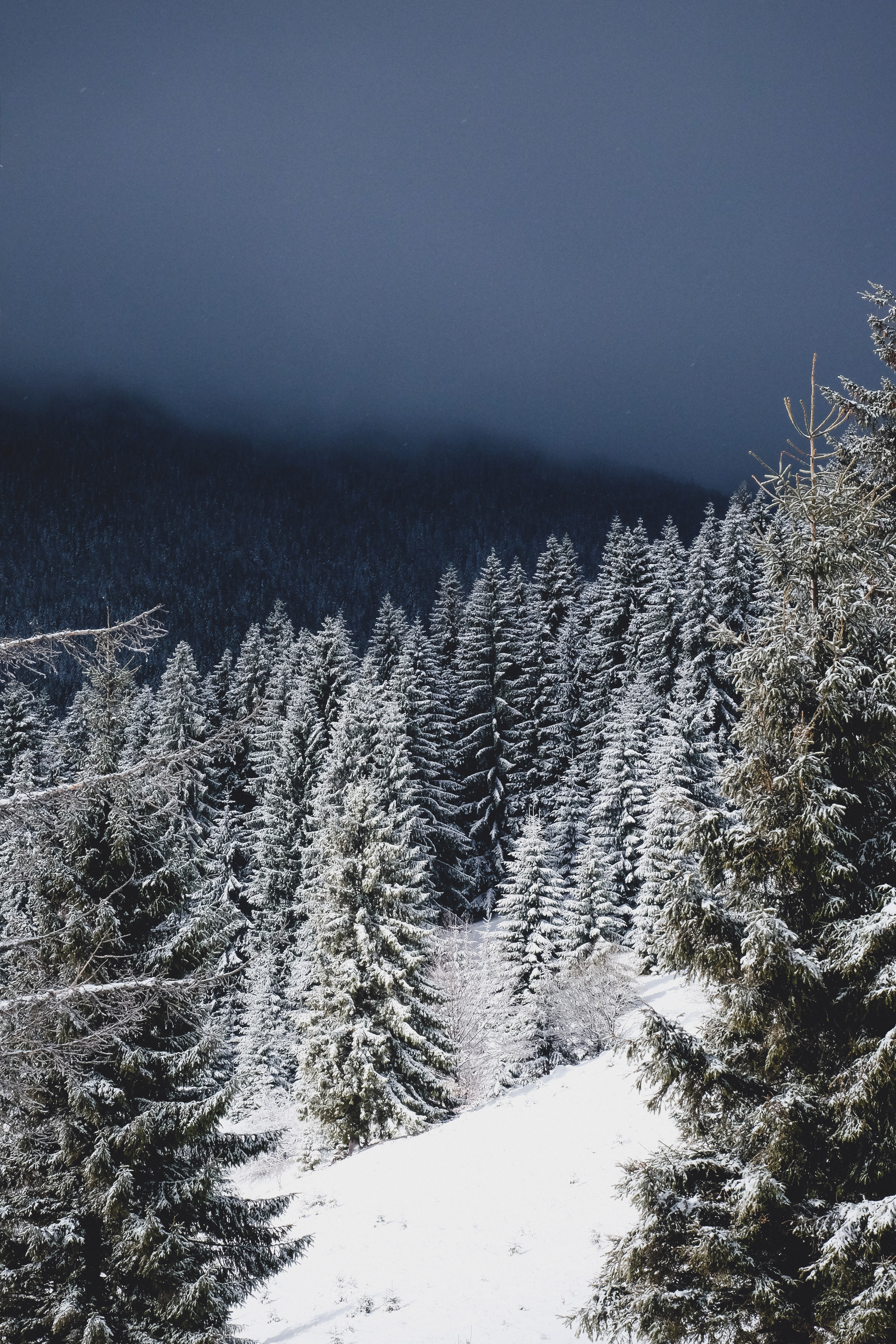 A forest covered in snow sitting on a mountain with dark clouds above