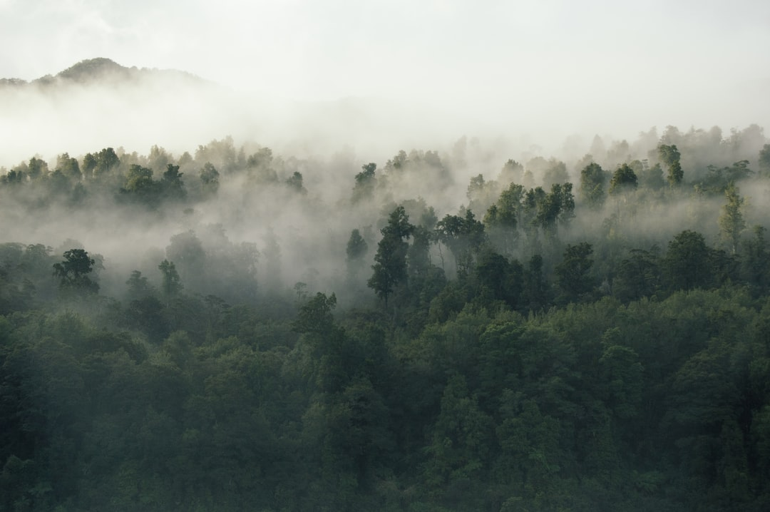 After we got up and out of our van that morning we took a little hike uphill and were presented with this foggy view.