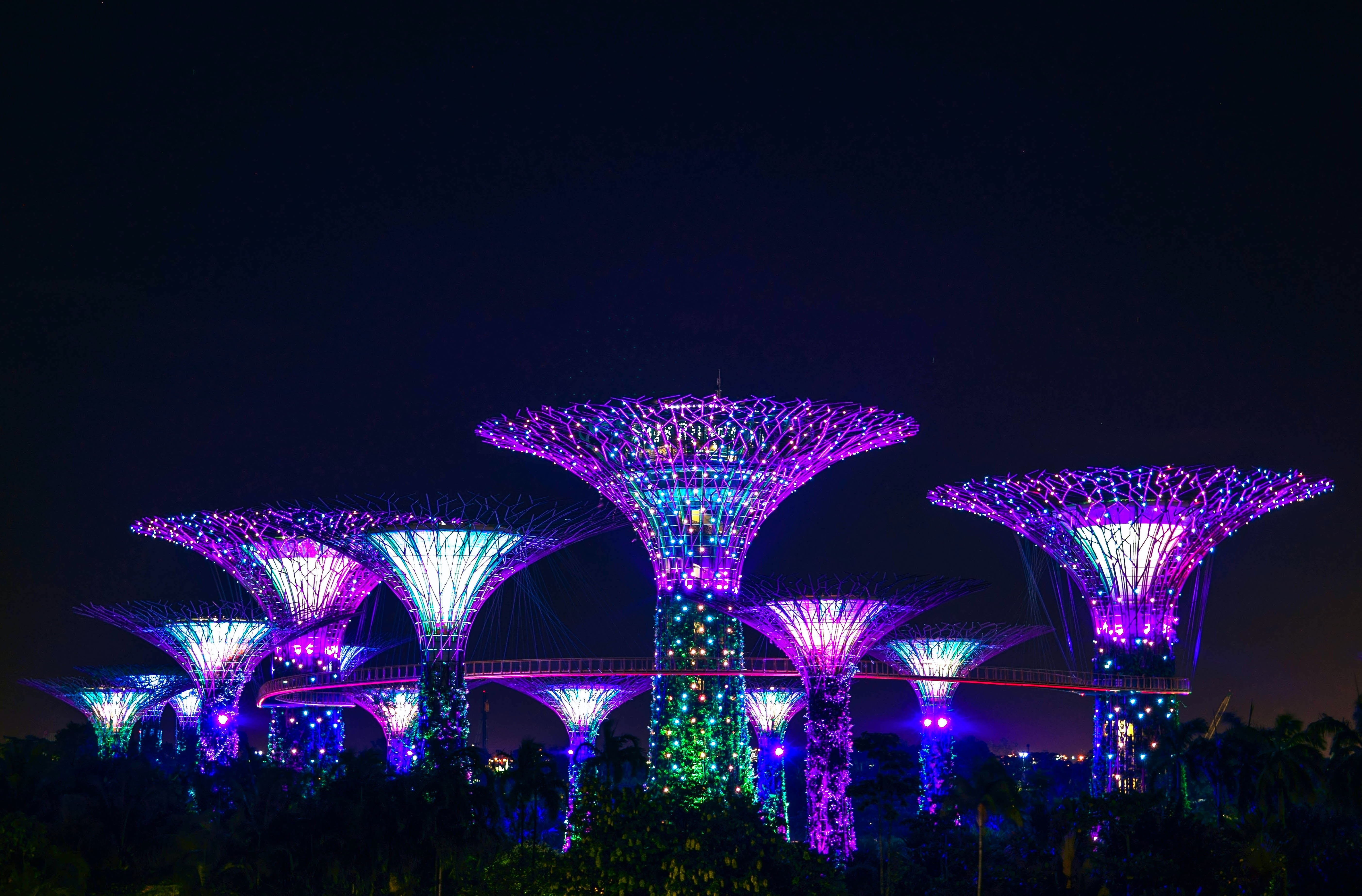 Large tree-like structures lighted up in purple at night