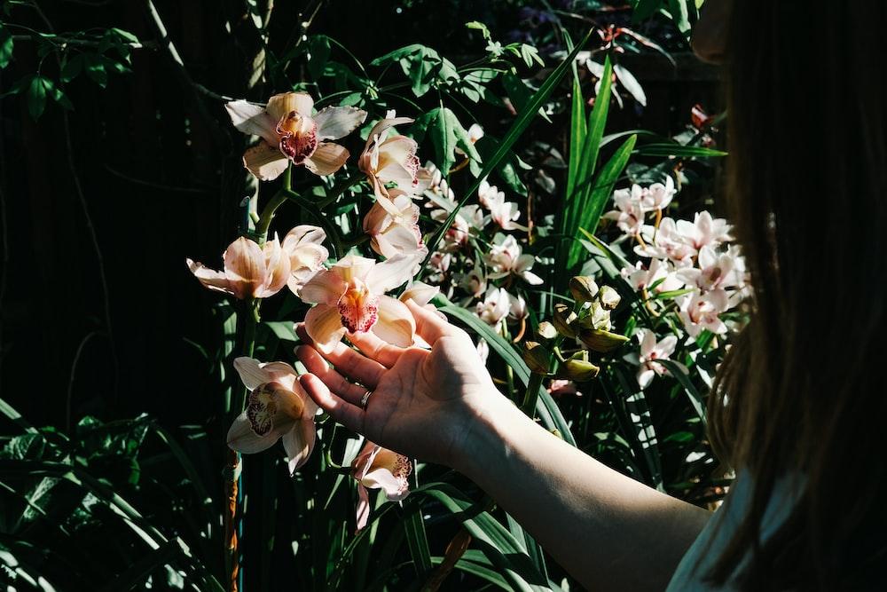 person holding white-petaled flower