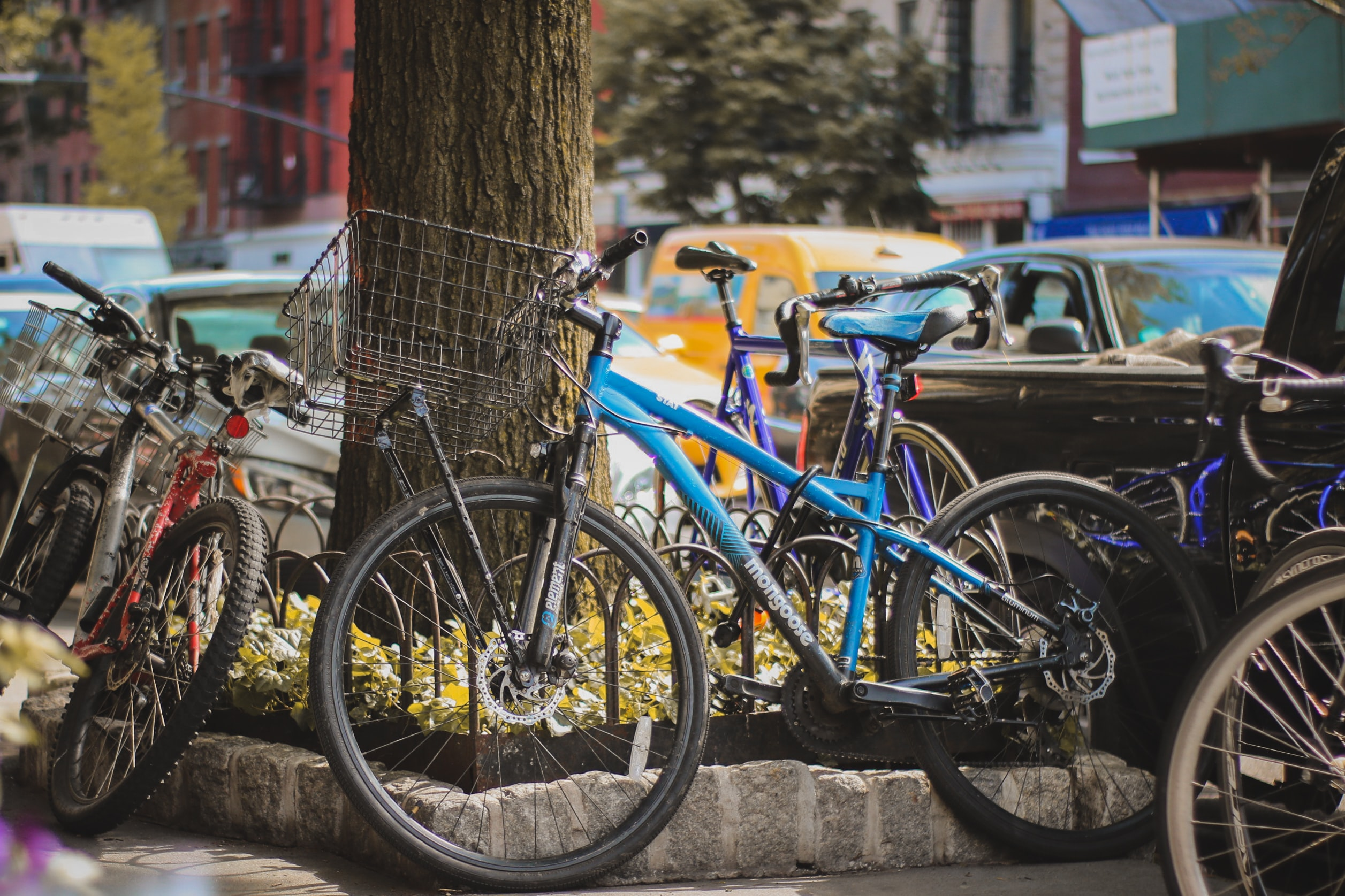 Bicycles parked and leaning against a tree in the city