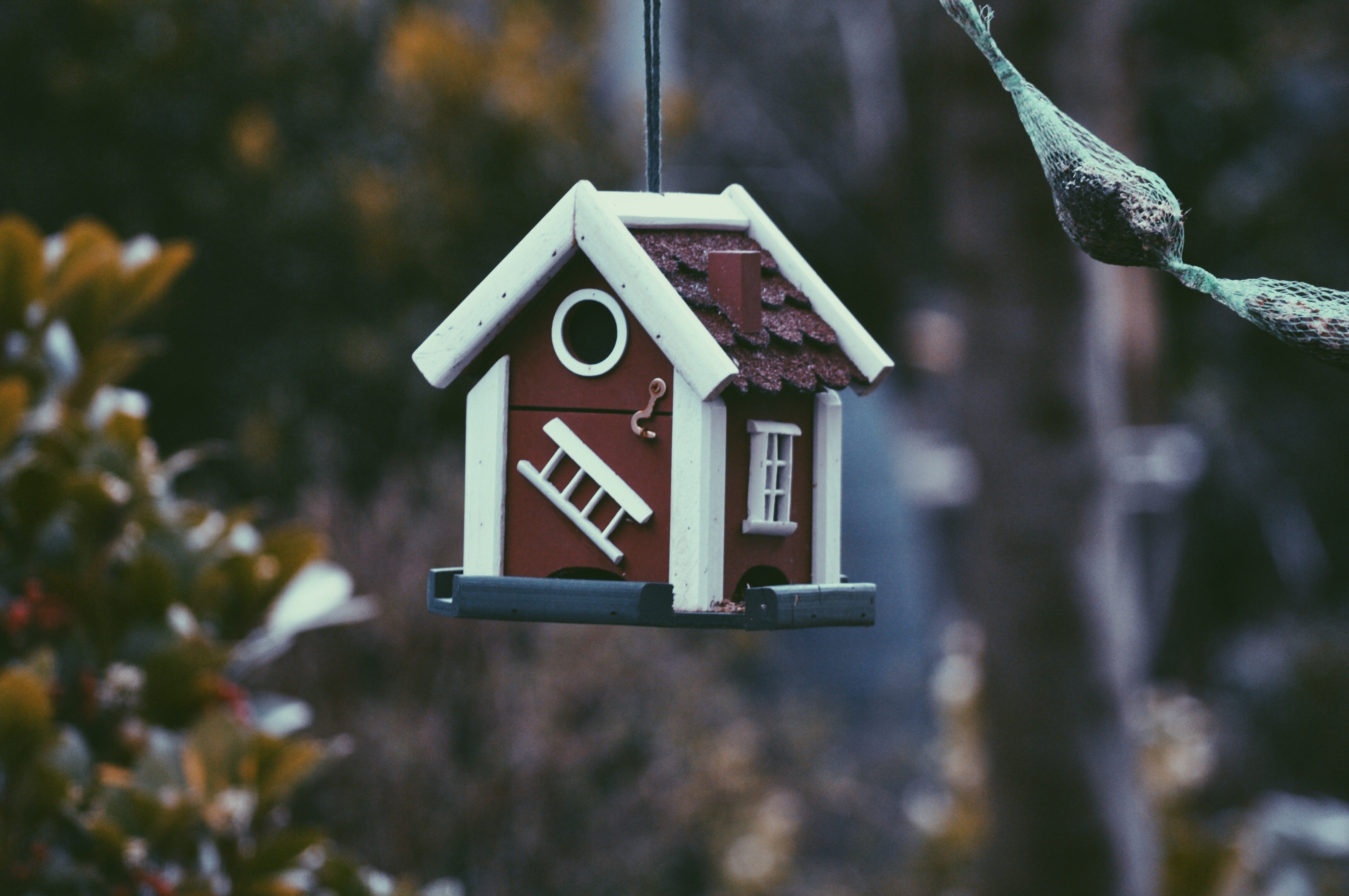 Brown and white birdhouse hanging from tree
