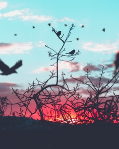 silhouette photography of birds and plants