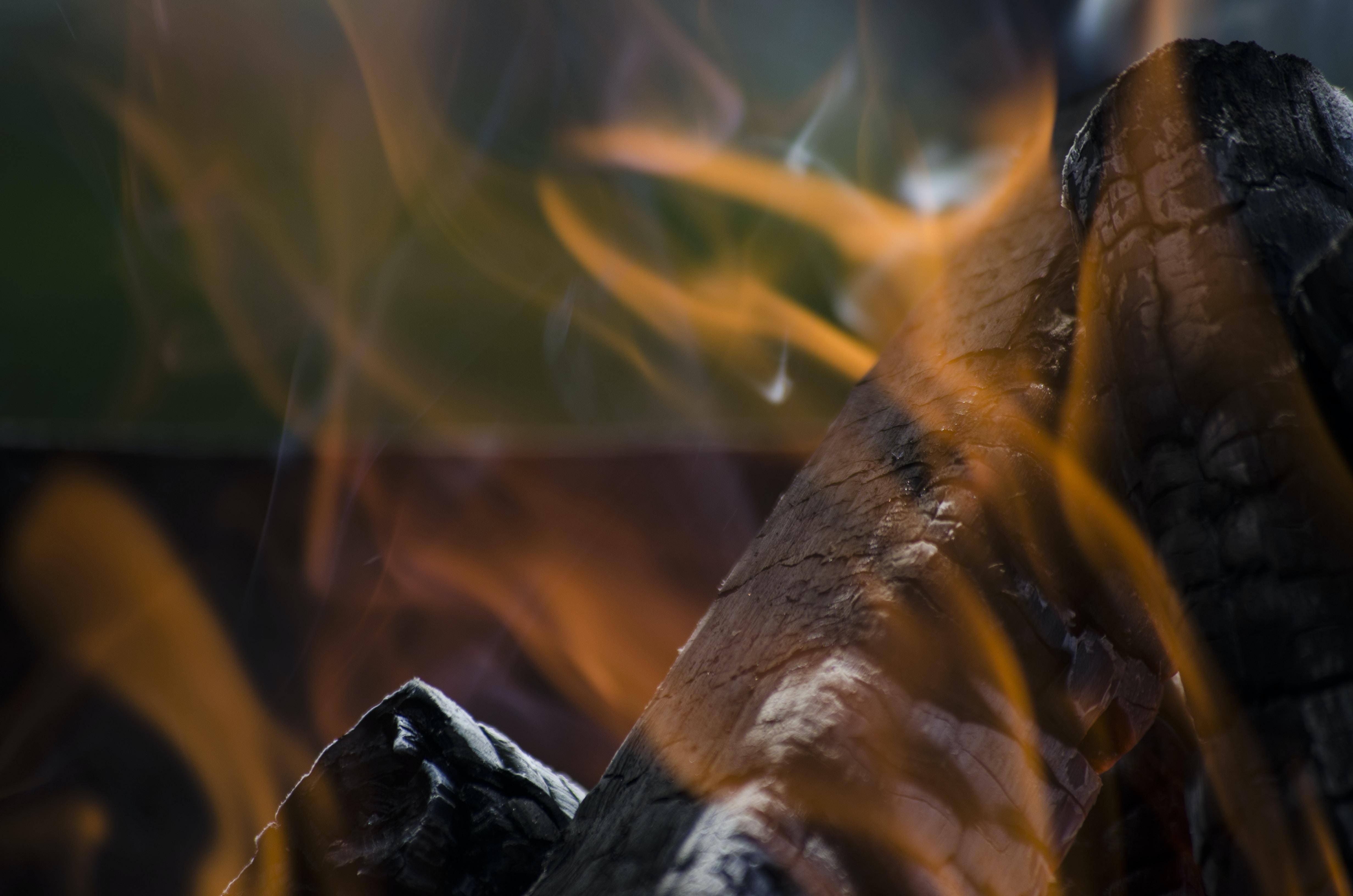 closeup photo of burned firewood
