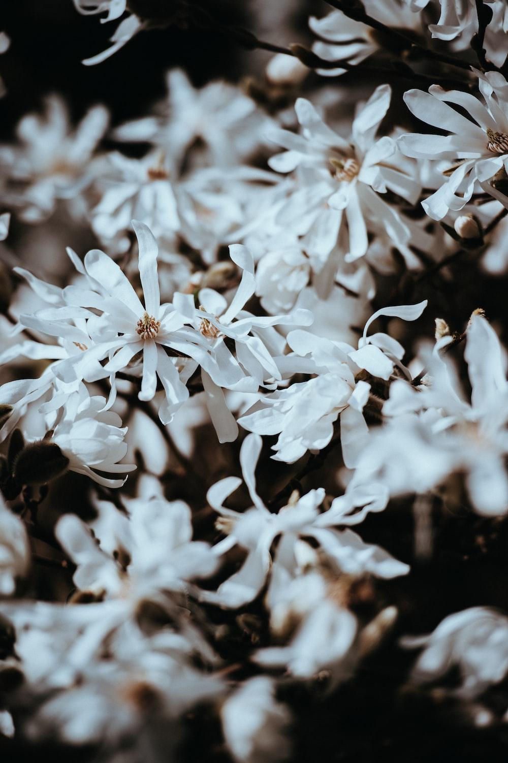 Long White Petals In Close Up Photo By Annie Spratt Anniespratt
